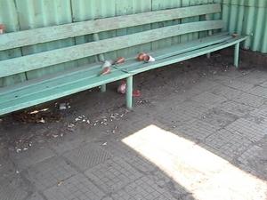 Сутрешно кафе на крак или на пейка в Драгичево